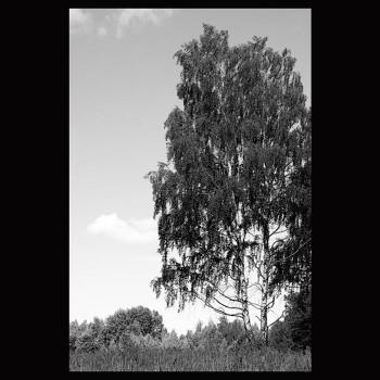 Пейзаж В19